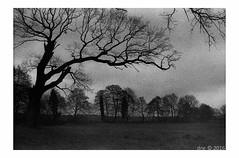 ORWO100_Usedom_2700dpi_-Bearbeitet (iknidi) Tags: tree germany grey minolta cloudy grau scanned sw xd7 baum kb usedom wolkig orwo rokkor mellenthin kleinbild usedomisland