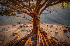 She's a beautiful tree. (MichaelSOwens) Tags: park red beach river island state florida fort stones southern cedar sound amelia campground hdr cumberland bluff fernandina ballast clinch stmarysriver