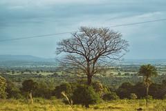 Cerrado (andr3ms) Tags: brazil nature brasil landscape countryside natureza paisagem cerrado j1 nikonflickraward nikoj