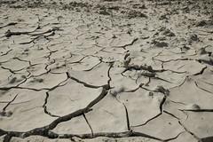 Dry mud (cinusek) Tags: mud dry ground drought cracks