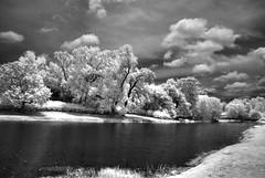 Mirror Lake (Howell Weathers) Tags: trees blackandwhite lake nature water monochrome clouds ir outdoor alabama infrared bellingrathgardens kolari