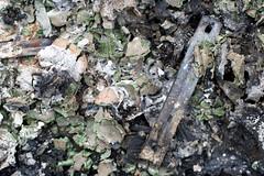 the remains of the boot (daniel_james) Tags: abstract australia nsw ash bentley northcoast 2016 northernrivers tamron60mmmacro burningoftheboots
