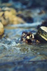 (Montalye) Tags: nature water bokeh helios