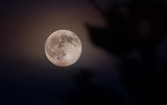 Moonrise (kareszzz) Tags: blue summer moon june night canon evening planet 2016 strawberrymoon canon70200l 70200l 60d canoneos60d 20160620