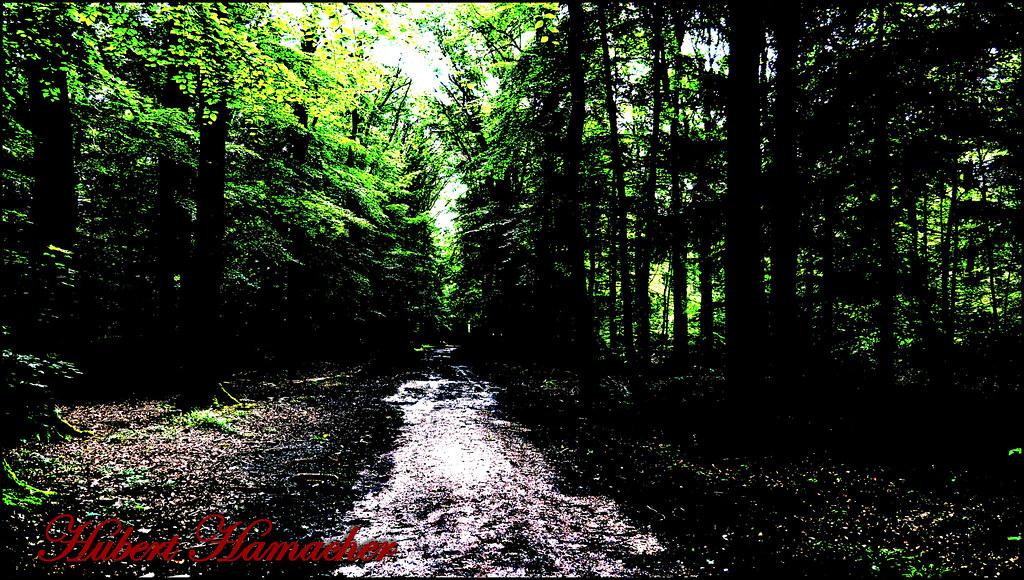 Tannenbaum Bilder.The World S Best Photos Of Bäume And Tannenbaum Flickr Hive Mind