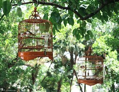 160604a2259 (allalright999) Tags: china green bird canon wooden powershot macau  cages   g1x