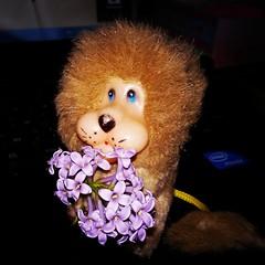 IMG_20160531_200103[1] (lenaeddie) Tags: flowers toy cutie loin littlemodel