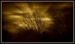 A golden morning (patrick.verstappen) Tags: trees summer texture nature landscape photo nikon belgium pat sigma mai textured picassa twitter d7100 pinterest picmonkey
