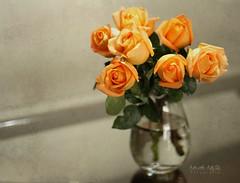 Feliz aniversrio! (Martha MGR) Tags: nature glass crystal natureza happybirthday vase bouquet yellowroses naturezamorta rosasamarelas