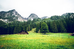 Where I want to live. (Todd Danger Farr) Tags: trees mountains austria greenfields