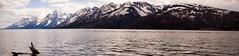 Jackson Lake (billycox) Tags: park lake snow mountains grand jackson driftwood national glaciers wyoming teton wy natl