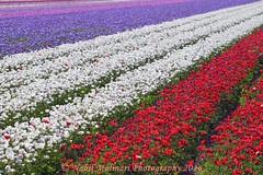 Paysage : IJweg, Hoofddorp, Netherlands (Nabil Molinari Photography) Tags: netherlands hoofddorp paysageijweg