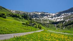 Last snow ? (hjuengst) Tags: schnee summer mountain snow hiking sommer meadow wiese blumen berge liechtenstein wandern malbun