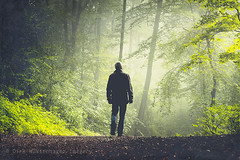 walk in solitude II (Dyrk.Wyst) Tags: morning trees light summer mist nature leaves fog forest sunrise germany landscape deutschland licht buchenwald haze mood nebel sommer laub natur atmosphere mystical mann wuppertal landschaft wald sonnenaufgang stimmung morgens beechtrees outdooor bume rcken