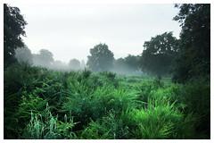 Misty morning (na_photographs) Tags: morning fern nature nebel farn ginster dunst morgenstimmung