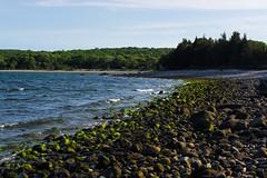 Algae on the rocks (E. Aguedo) Tags: ocean new trees england beach nature john island rocks ngc north h rhode preserve algea kingstown chaffe