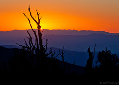 Sunrise in the White Mountains (Jeffrey Sullivan) Tags: california copyright usa pine sunrise canon photo august whitemountains layers bishop allrightsreserved bristlecone 2010 easternsierra inyocounty ancientbristleconepineforest jeffsullivan
