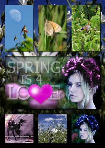 springCollage2Type
