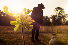 Old Geezer Farm (Creative_Light_Photography) Tags: dog silhouette back nikon huntsville bokeh farm alabama f16 lensflare lit gurney stobist d700 60mmafdmicro lightroom5 oldgeezerfarms