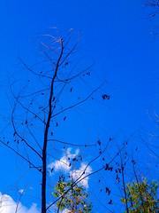 seca (jean carlos dias) Tags: sky nature beautiful azul natureza arvore seca ceu morta