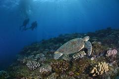 2013 04 METTRA OCEAN INDIEN 1751