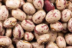 Common beans (Ervins Strauhmanis) Tags: red food white plant field garden french beans painted dry snap bean pop string common edible vulgaris flageolet haricot phaseolus