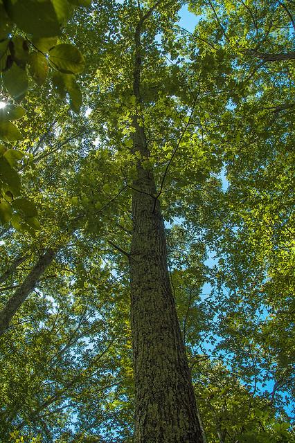Hoosier National Forest - Nebo Ridge - August 2013