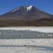 Flamingo Lake Altiplano Landscape Andean High Plateau Bolivia South America