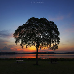 In Between (bing dun (nitewalk)) Tags: sunset singapore pentax tbd nitewalk upperseletar bingdun