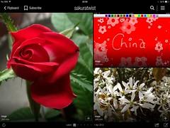 image (sakuratwist) Tags: china twist sakura sakuratwist