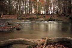 Abrams Creek - Cades Cove, TN (PhotoJacko - Jackie Novak) Tags: longexposure water landscape smokymountains naturephotography ndfilter abramscreek