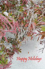 Winter Wonderland (EMKaufman) Tags: christmas flowers winter red brown white holiday plant cold flower tree green ice nature water weather painting season happy frozen berry holidays branch berries wind crystal painted branches freezing scene newyear gift freeze icicle iced botany happyholidays icicles redberry wishing
