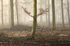 Born To Fly: Shortlisted - Outdoor Photographer Of The Year 2014 (Russ Barnes Photography) Tags: wood winter mist tree fog forest woodland wings nikon cotswolds russbarnes nikkor70200mmvrii d800e