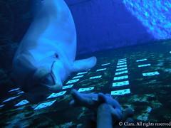 I have never know a dolphin like you (Clerss Malisha) Tags: cute animal animals marina mammal aquarium marine dolphin genoa genova dolphins di mammals dauphin acquario animali animale wal captivity cautiverio delfino dauphins delphin cetaceo mamiferos tierno delfini cetaceans cetacean doux mamifero cetaceos angebot mammifero acquariodigenova cetacei mammiferi aquariumofgenoa saugetier saugetiere cativit