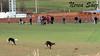Galgos vs Liebre de nuevo (Amiga ilusión.) Tags: naturaleza pueblo campo animales campeonato zamora carreras caza castillayleón afición galgos competición liebres
