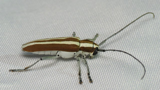 bug of the day