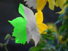 St Patricks Day Fun (view findr) Tags: life ireland light portrait urban sun plant flower macro london art church nature garden landscape fun effects dof view zoom wildlife sony eire stpatrick fx ornamental depth