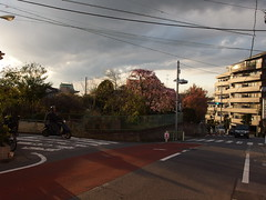 Akatsuka @ Itabashi (*_*) Tags: flower tree tokyo asia blossom april akatsuka hanami kanto itabashi