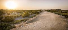 causeway to purple island, al khor, qatar (Jeff Epp) Tags: landscape island path middleeast mangrove afternoonsun causeway desertlandscape qatar alkhor purpleisland arabgulf qatarliving april2014 jaziratbinghanim