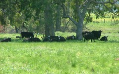 KILDARE, Merriwa Road, Willow Tree NSW