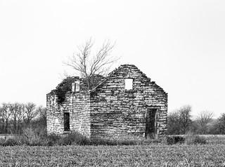 A Houseplant Makes a House a Home