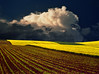 Yellow field..again..:) (Katarina 2353) Tags: sunset sky cloud love film nature field yellow landscape this photo spring nikon image outdoor dramatic fields agriculture katarinastefanovic katarina2353 serbiainspired galerijablueplanet