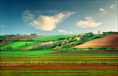 Spring pastoral (Katarina 2353) Tags: film landscape spring nikon europe serbia fields agriculture vojvodina srbija beska katarinastefanovic katarina2353