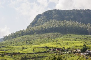 nuwara eliya - sri lanka 29