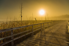 Marsh morning (pierre.cornay) Tags: trees summer sunrise landscape golden soleil warm foggy sunny marsh t paysage marais pathway nautre lever matin bulrushes dor chaleur passerelle