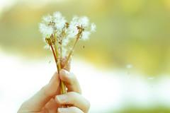 M_Cherry-20 (famousartist101) Tags: summer girl grass photography nebraska redhead kearney dandelions
