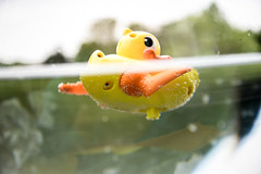 You're the One! (AngelBeil) Tags: yellow toys explore fishbowl rubberducky