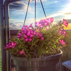 #like #it #blumen #sun #sky (christophmeisel1) Tags: sky sun like blumen it
