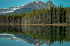 Rocky Mountain Reflection (corybeatty) Tags: park trees mountain lake canada mountains reflection tree nature beauty forest rockies nikon national alberta banff wilderness