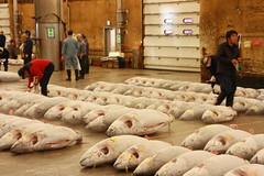 IMG_5847 (tsaaby) Tags: japan fishmarket fisk fiskemarked tmfstudietur